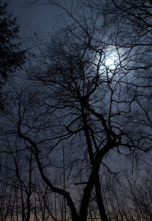 Night scenery of forest with Moon Stock Photo - 662684