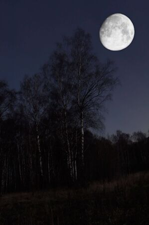 Night scenery of forest with Moon Stock Photo - 662685