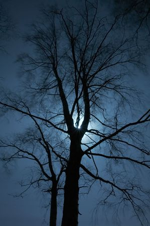 Night scenery of forest with Moon Stock Photo