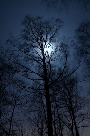 Night scenery of forest with Moon Stock Photo - 681616