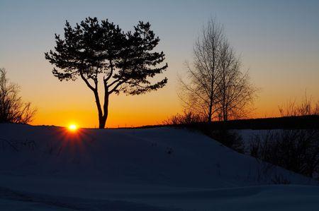 Silhouet van de boom in de winter zonsondergang Stockfoto