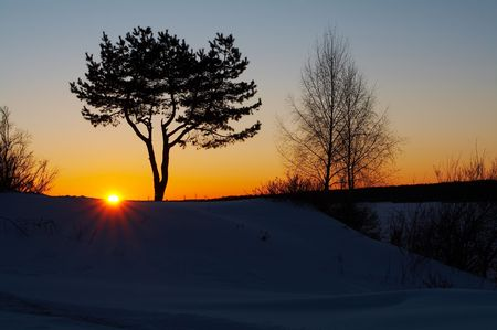 Trees silhouette at winter sunset
