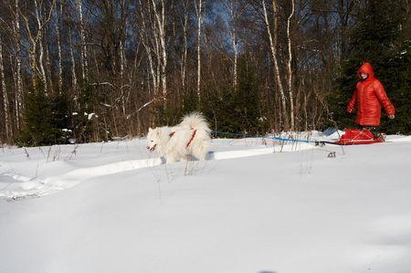 Meisje in de winter kleding een wandeling met de hond