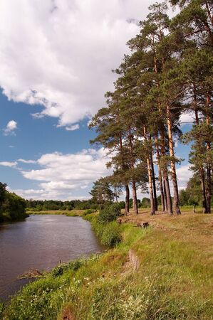 Pine trees on river bank
