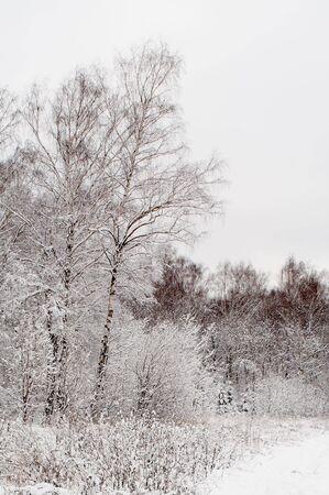 Bomen in sneeuw in de winter, Rusland Stockfoto