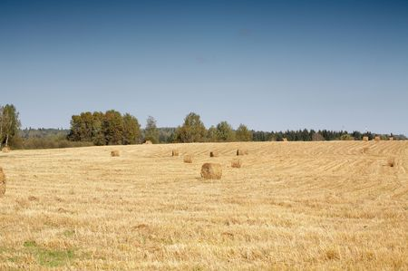 Mowed field with hay rools