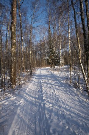 Earth road in winter forest