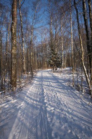 earth road: Earth strada nella foresta d'inverno Archivio Fotografico