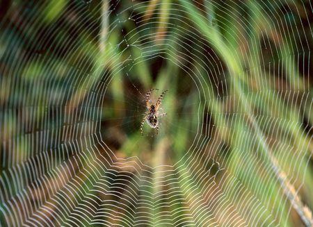 (Araneida) Spider on web close up Stock Photo