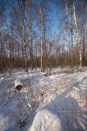 Russian winter in wild forest Stock Photo