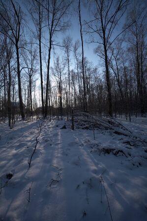 Russische winter in bevroren bos Stockfoto