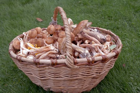 Forest edible mushrooms close up Stock Photo