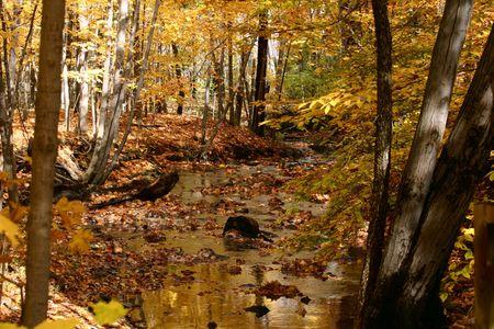 quietude: Golden Autumn Stream