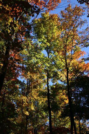 Bright leaves, blue sky