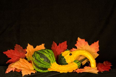 Centerpiece of autumn items on background of black micro velvet photo