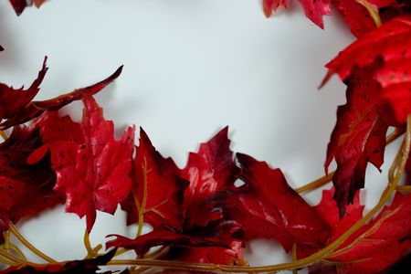 writable: Semi-Frame of Red Maple Leaves on a Bright White Writable Background Stock Photo