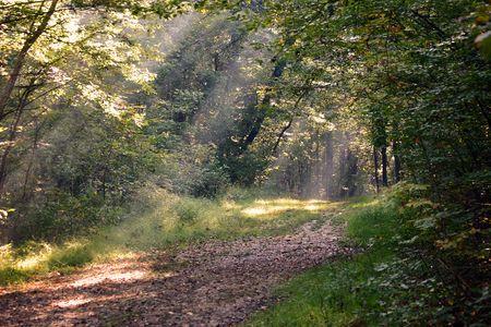creador: El rayo de sol encendi� la trayectoria en el bosque