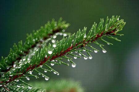 mornings: Mornings Dew
