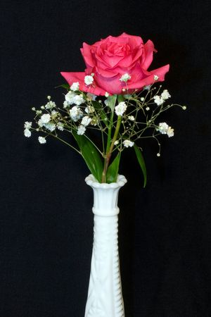 Single perfect pink rose in a white hobnail vase isolated against a black velvet background with high depth-of-field focus.n