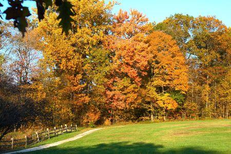 Rural park landscape in full autumn foliage photo