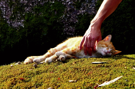 caress: Cat sleeping on the moss enjoying the caress of the man and the sunshine