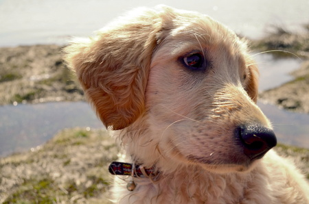 lake beach: Curious dog sitting on the lake beach