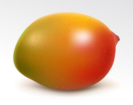 fruited: Ripe juicy mango Illustration