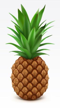 Fresh pineapple Illustration