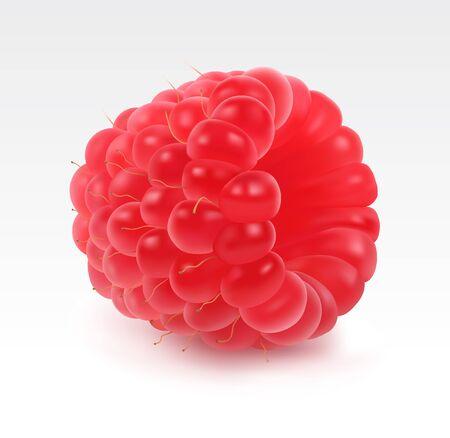 raspberry pink: Fresh raspberry single