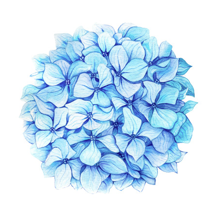 Watercolor illustration of hand painted blue hydrangea
