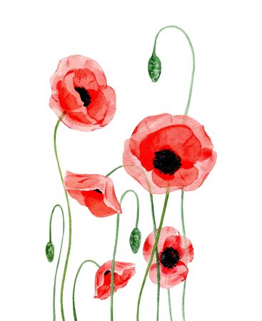 Watercolor illustration of hand painting red poppies Stock Photo