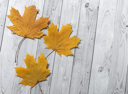 Autumn yellow leaves on light wooden background