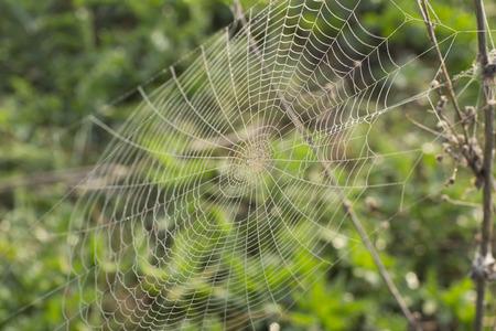 arachnids: morning dew on a spider web Stock Photo