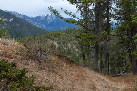 Hiking Trail on Mt. Swansea near Invermere BC.