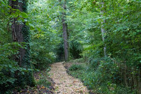 Footpath through wooded area in nature.