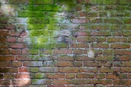 Moss grows on an old brick wall.