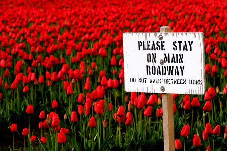Stay on Roadway sign and tulips Reklamní fotografie