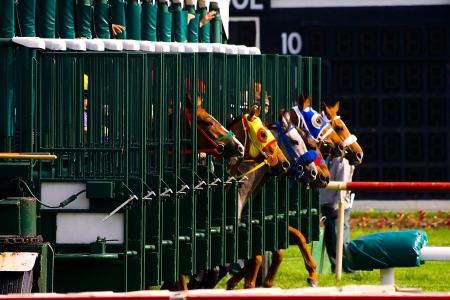 cavallo in corsa: Inizio di corsa di cavalli Archivio Fotografico