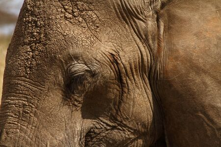 Close up shot of an elephant Stock Photo - 16916540