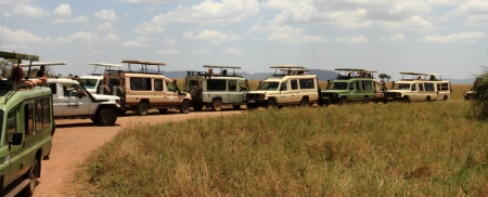 Safari trucks all stopped in one spot to view wildlife
