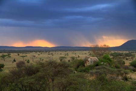 A sunset through rain clouds on the african savannah