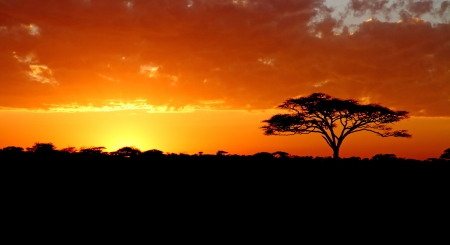 A vibrant colored sunset in Africa with acacia tree silhouette Stock Photo