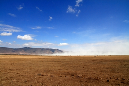 Landscape view inside the ngorongoro crater of tanzania featuring a dust cloud