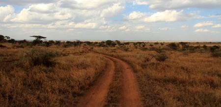 road and path through: A dirt road path cuts through the Serengeti, Tanzania