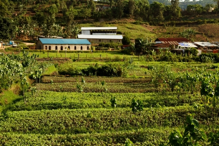 An example of African agriculture in Kibuye, Rwanda Stock Photo