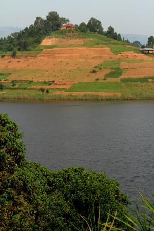 bunyoni: A farm with planted fields on an island hill in Lake Bunyoni, Uganda