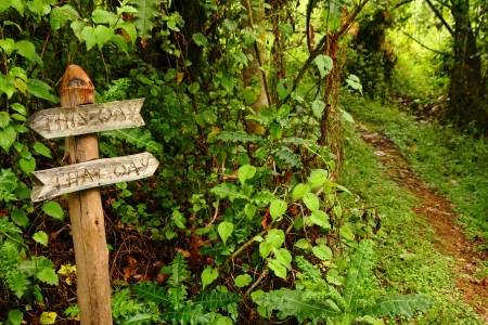 A funny wooden garden sign reading 'This Way, That Way', pointing down the path into the woods. photo