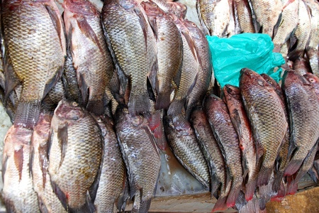 kampala: Piles of fresh tilapia fish ready for sale in a public market in Kampala, Uganda Stock Photo