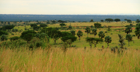 A look at some Ugandan countryside   Image has a vintage effect applied  Stock Photo