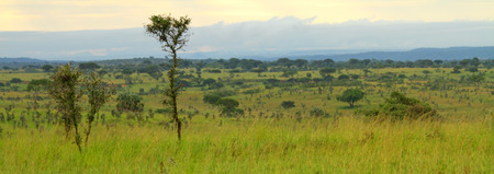 A look across an Ugandan valley covered in green trees and grasses